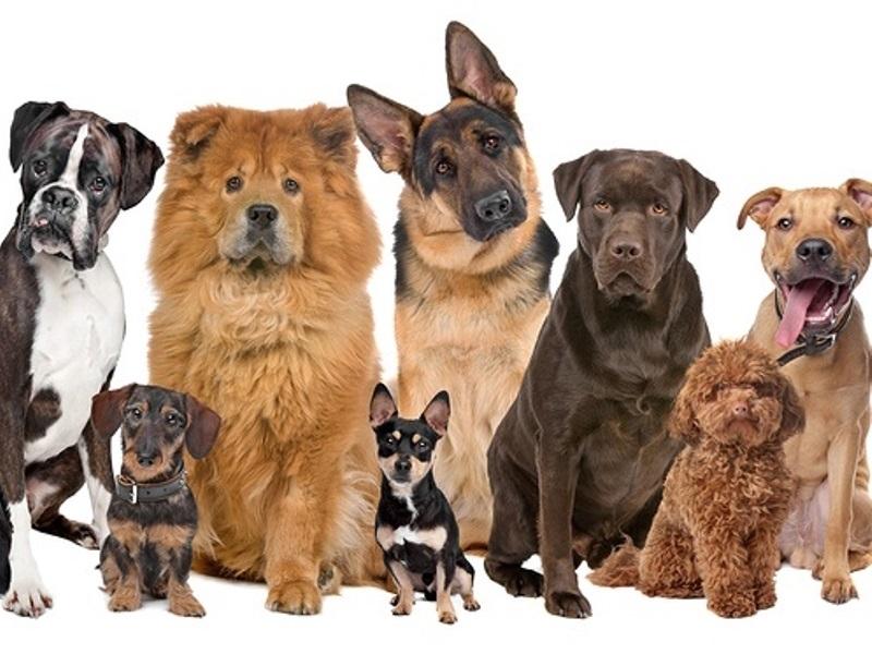 Община Мездра напомня на собствениците на домашни кучета, че крайният