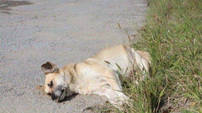 Отровни примамки убиват улични и домашни кучета в Монтана, научи