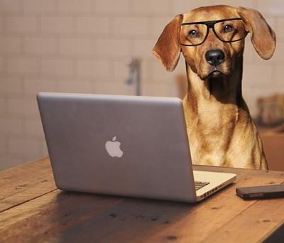 Във Великобритания днес се отбелязва денят, в който кучетата могат