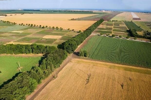 """Доказаната фирма """"Дъбника Агро"""" обяви, че търси да наеме/арендува земеделска"""