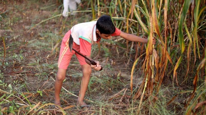 Инспекцията по труда активизира контрола в селското стопанство във връзка