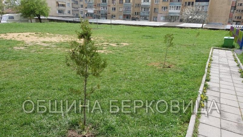 По повод тазгодишната Седмица на гората (2-8 април) Община Берковица