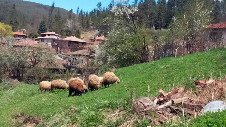 Екипи на полицията изведоха протестиращи и доброволци от село Шарково.