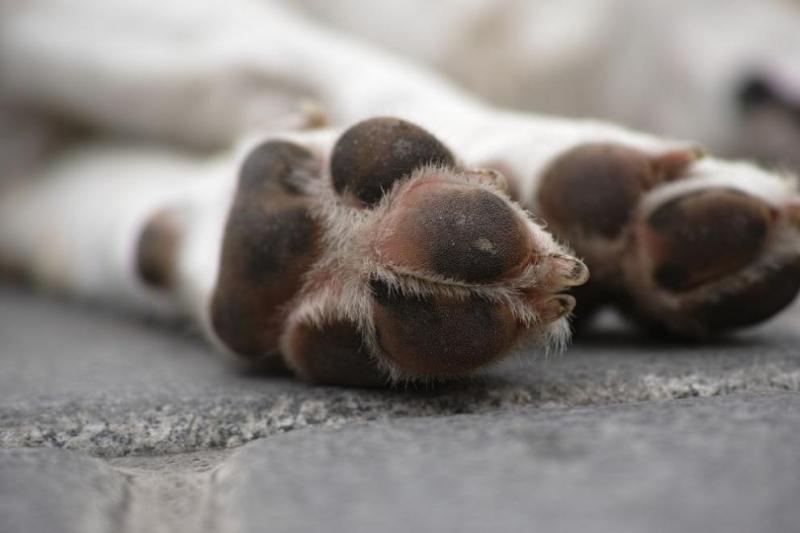 Домашно куче е открито мъртво пред дома на стопаните си