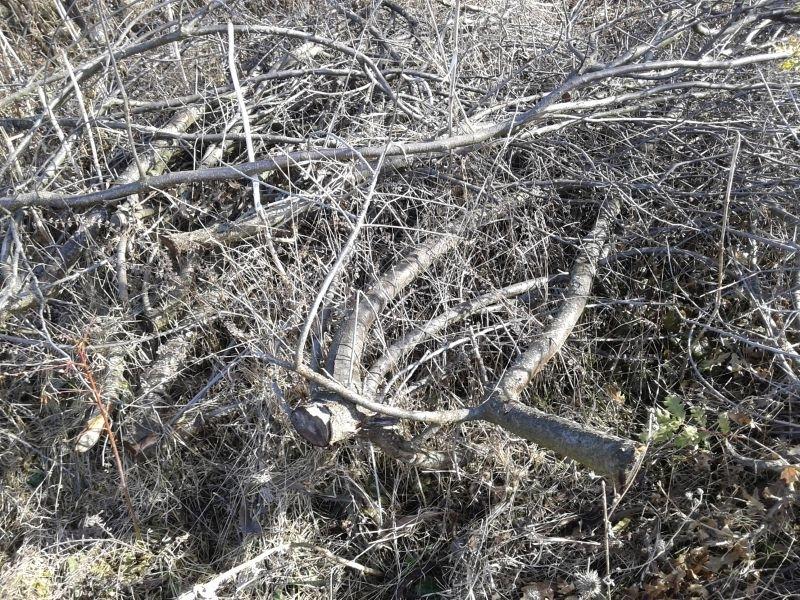 Подготовка за зимата! НАП пусна на търг дърва за огрев във Врачанско /снимка/