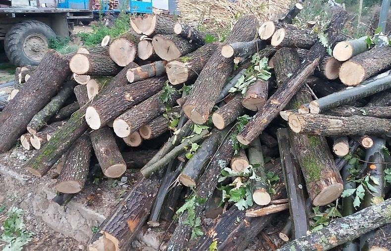 Служители на реда са намерили и иззели незаконни дърва за