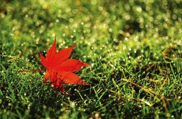 До края на седмицата времето ще е типично септемврийско –