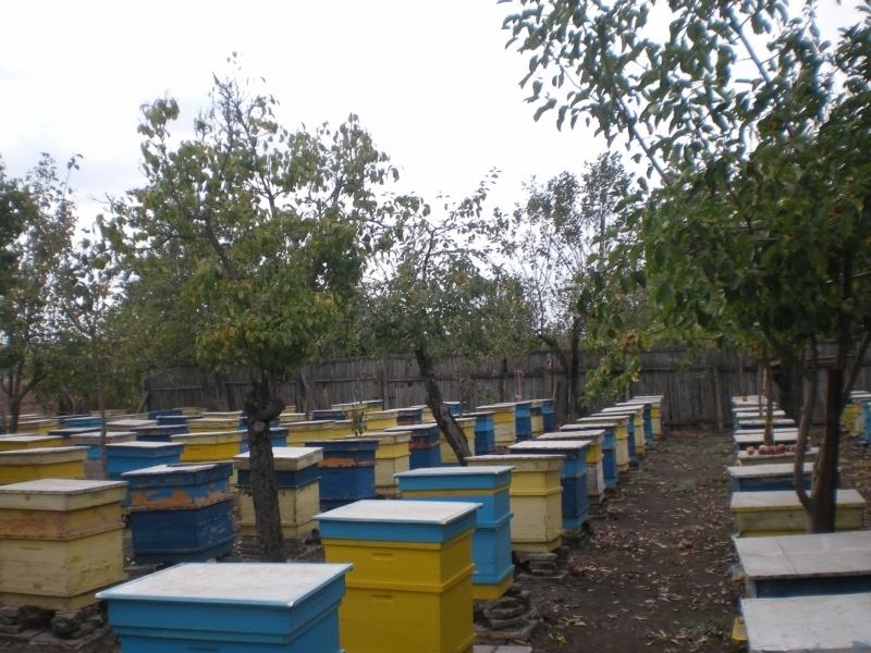Внимание, пчелари! Пръскат царевицата в село Добролево