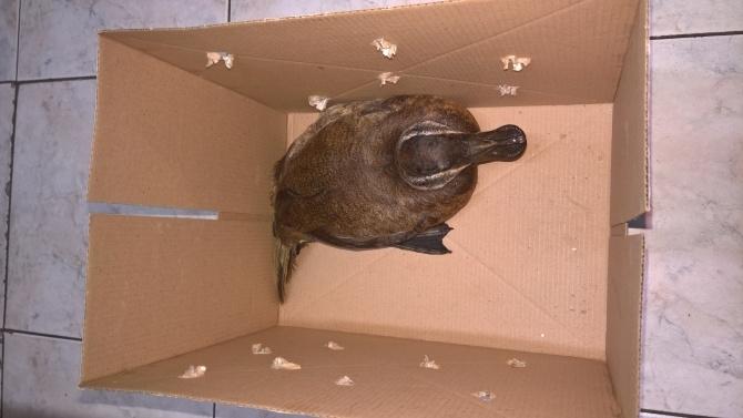 РИОСВ - Бургас спаси защитен вид птица. Това съобщиха от