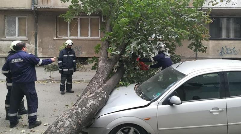 """Силният вятър събори дърво върху лек автомобил """"Форд Мондео"""", паркиран"""