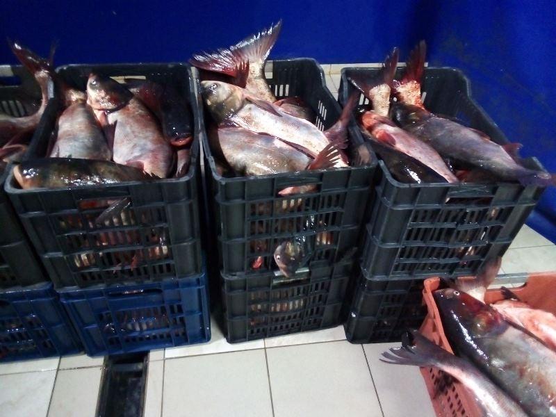 Голям улов! Инспектори от ИАРА в Монтана конфискуваха близо 140 кг риба