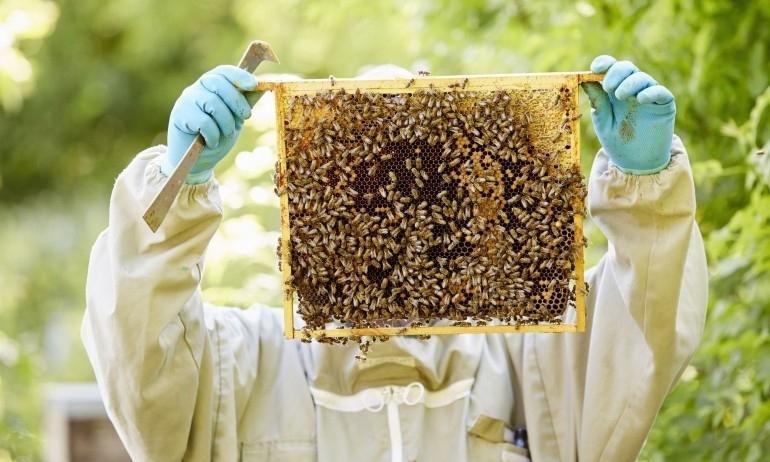 До 31 януари 2021 г. пчеларите и стопаните, обработващи площи