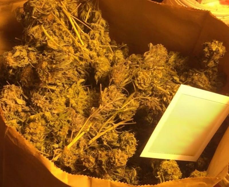 Столични полицаи са разкрили домашна оранжерия за марихуана, съобщиха от