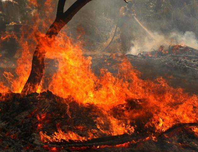 Югозападното държавно горско предприятие започва проверки преди активния пожароопасен сезон.
