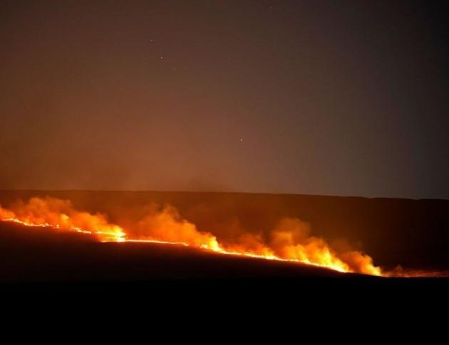 Голям пожар избухна през нощта в боровата гора близо до