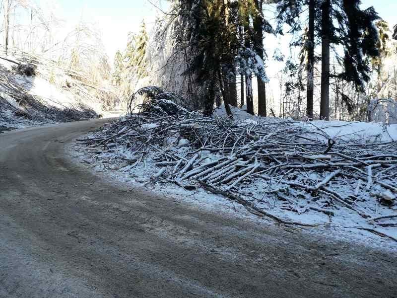 Продължава разчистването на падналите и пречупени дървета и клони на