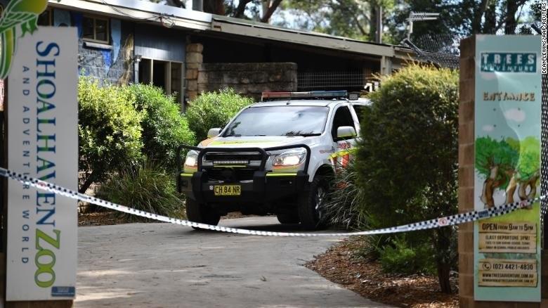 Два лъва нападнаха жена, чистеща заграждението им в австралийски зоопарк,