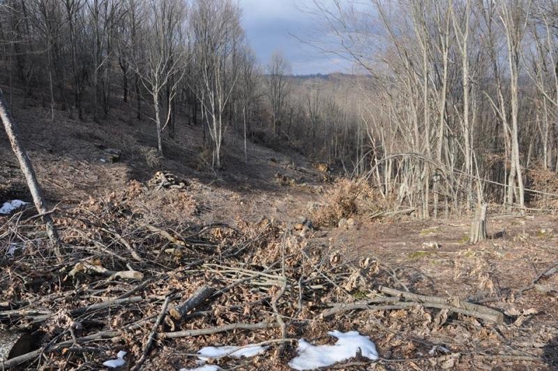 Пипнаха бракониер с 2.5 кубика незаконни дърва