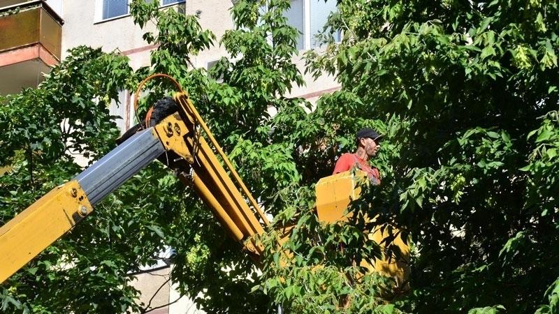 Снимка: Напаст! Гъсеници нападнаха дърветата във Видин