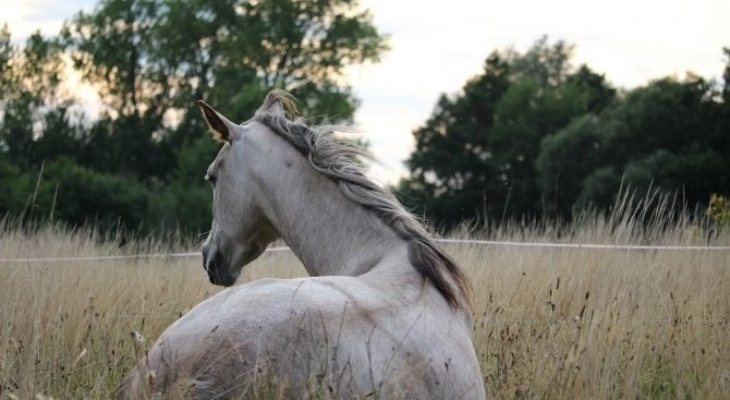 Видеоклип, в който се вижда как мъж пребива уморен кон,