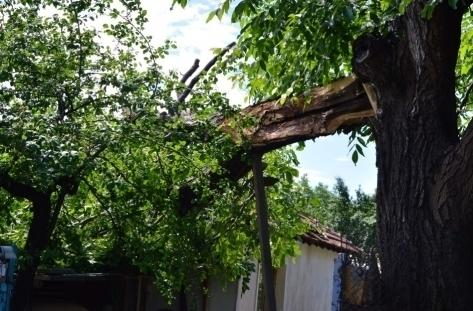 Дърво падна върху покрива на къща в Монтанско, съобщиха от