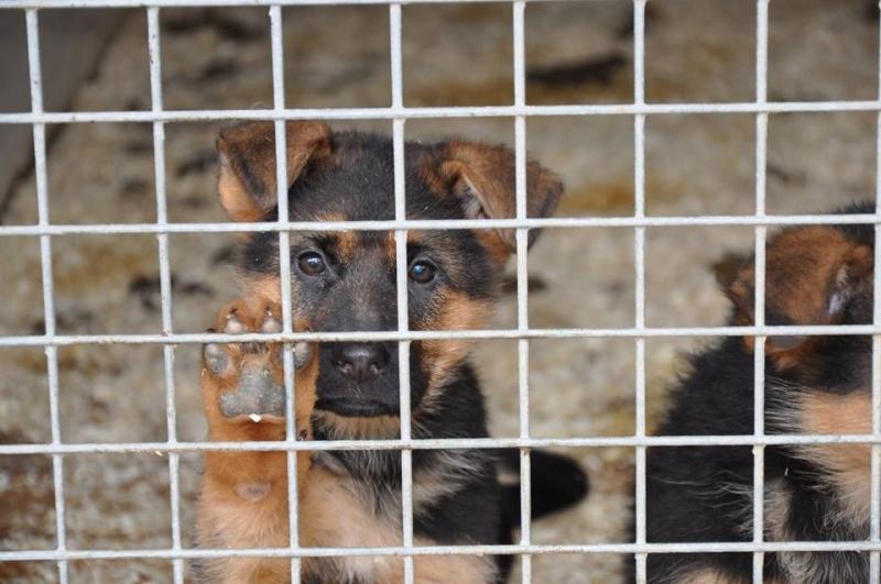 Китайски полицаи арестуваха в мъж, койтокрадял кучета и продавал месото