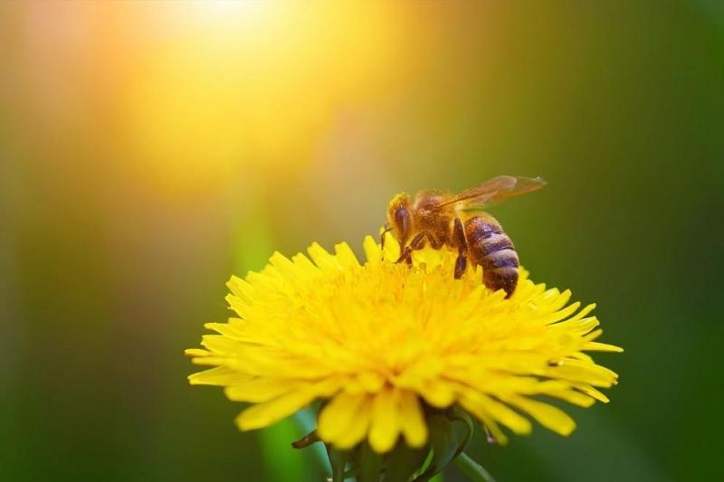 Пчелите също може да пострадат от Брекзит