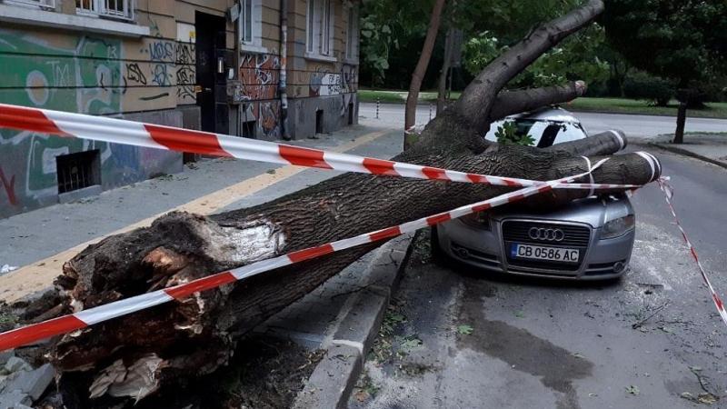 Дърво падна и премаза лек автомобил в столицата,предаде БГНЕС. Инцидентът
