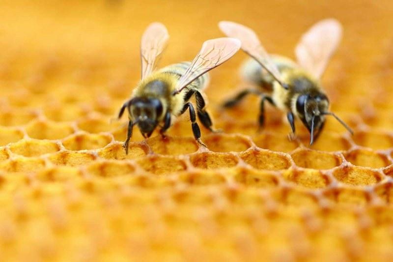 """Благотворителната фондация """"Адра-България"""" и видинското пчеларско дружество """"Димитър Балев"""" ще"""