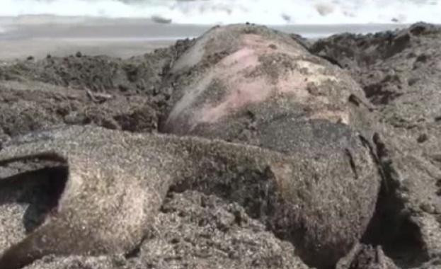 "Обезглавено бебе делфинче стресна плажуващите на ""Корал"". Според еколозите вероятната"