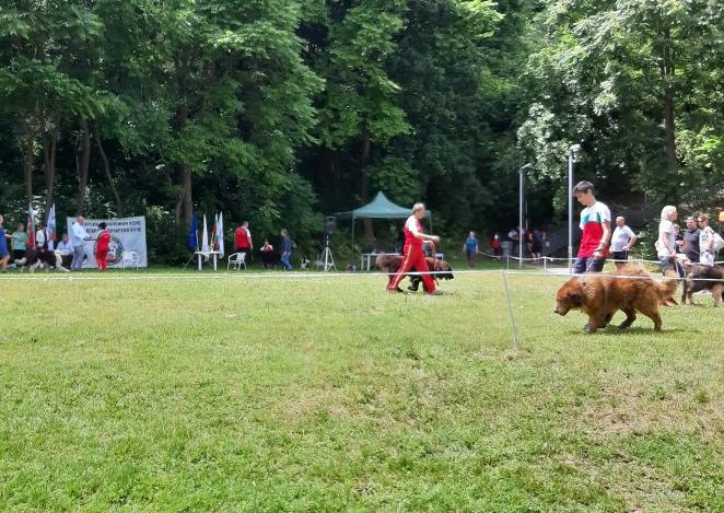 Кучета от цяла България са представени на юбилейната киноложка изложба