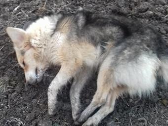 Откриха четири мъртви кучета във Врачанско, съобщиха от полицията. На