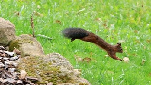 Учени откриха непозната летяща катерица в Югозападен Китай, която е
