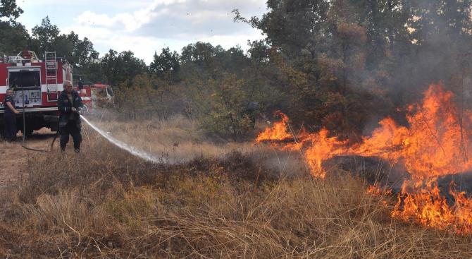 Снимка: Огньове изпепелиха 500 дка сухи треви в Монтанско