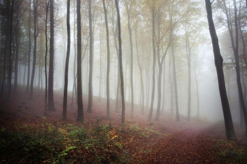 Почти 300 проверки са извършени за седмица в горските стопанства