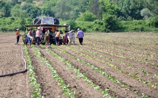 От днес, 26 май 2020 г., земеделските стопани и тютюнопроизводителите