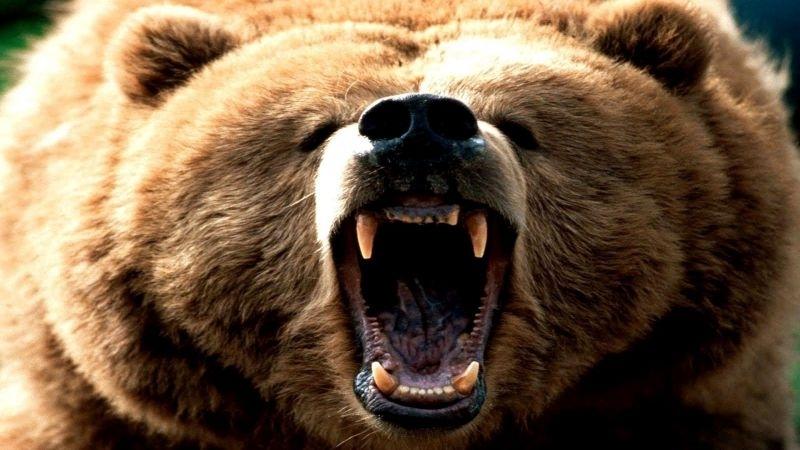 Кафява мечка нападнала 47-годишен мъж по време на организиран лов