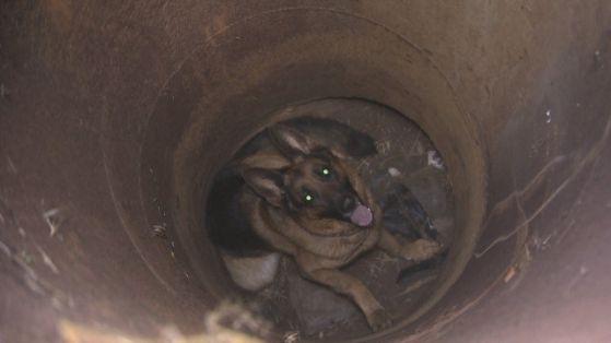 Добрата новина! Спасиха куче, паднало в шахта във Видин
