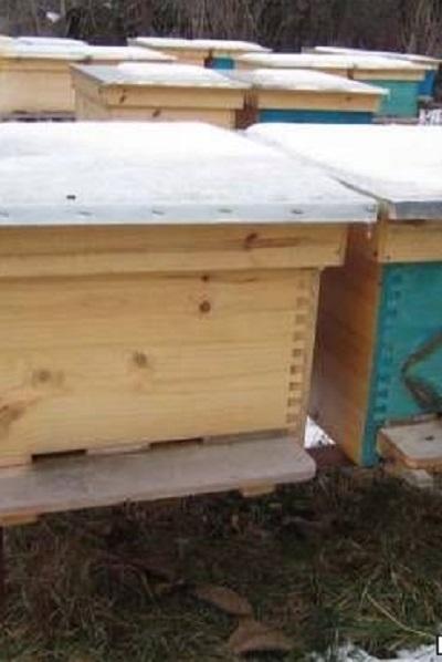 Полицията разследва кражба на пчелни кошери във врачанското село Крива