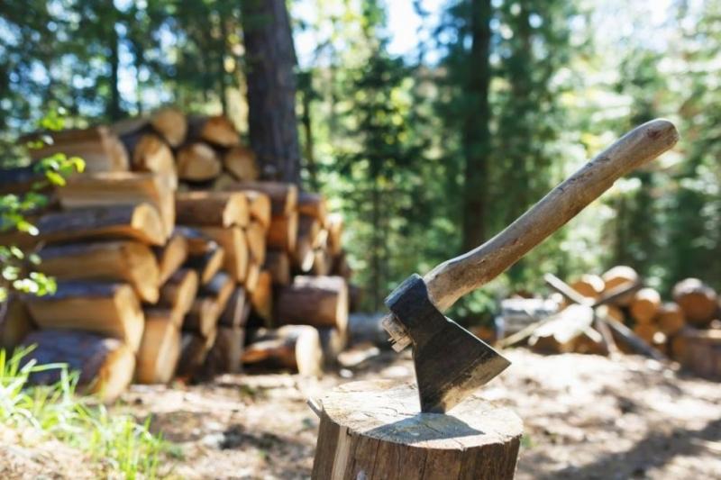 Наглец отсече над 25 дървета от частен имот във Видинско