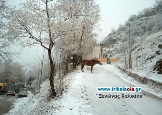 Първият сняг за тази зима падна в планинските райони на