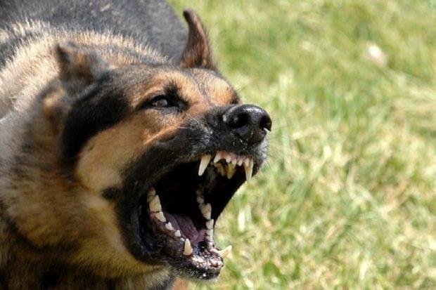 Две жени бяха нападнати и ухапани от бездомни кучета в