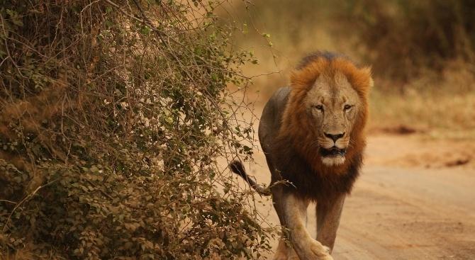 Бял носорог, два лъва, жираф и две хиени са загинали