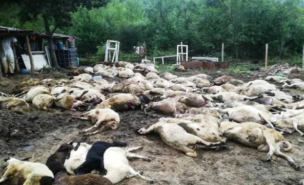 Обезщетенията за евтаназираните животни ще бъдат по 190 лева за