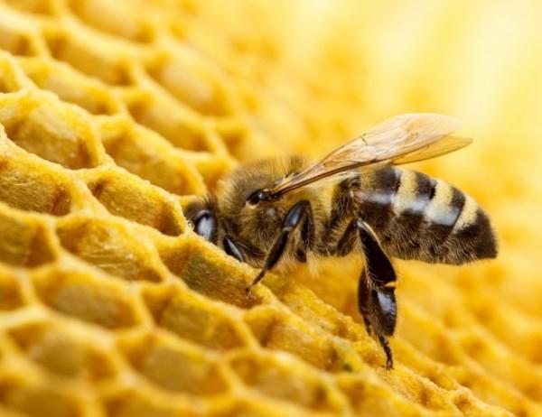 Топлото време в момента налага допълнително захранване на пчелните семейства.