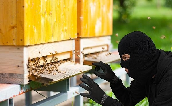 Заловиха видински бандити, задигнали 12 пчелни кошера в Димово