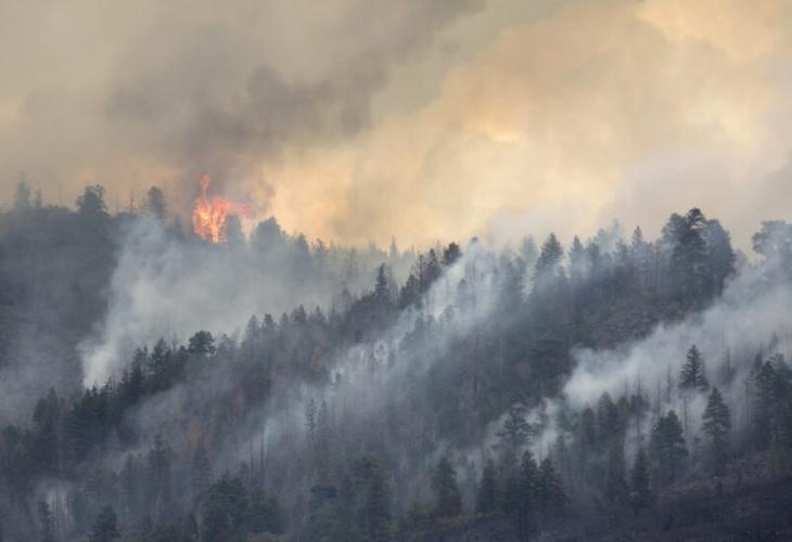 Гора и сухи треви са пламнали в района на Ситония
