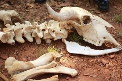 Преди повече от 5000 години група хора, живели на днешната