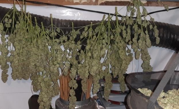 """Специализираната полицейска операция на сектор """"Наркотици"""" в ГДНП и Специализирани"""