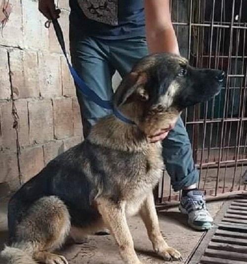 Ефектът BulNews! Спасиха кучето, измъчвано от циганин във Враца